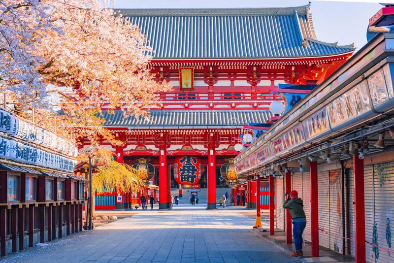 TOKYO,JAPAN-APRIL 9,2016:Cherry blossom,Sensoji-ji Temple in Asakusa is Tokyo`s oldest temple, and one of its most significant in stock photo