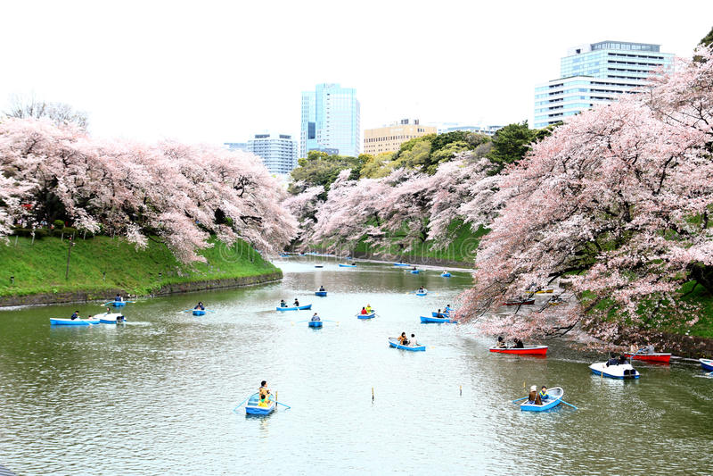 Tokyo Japan - April 04: Ett oidentifierat folk kopplar av i körsbär royaltyfria foton