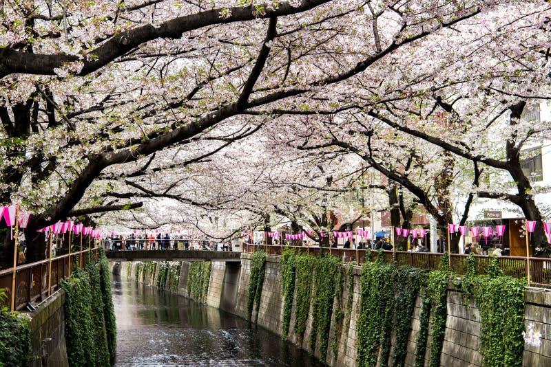 Tokyo, Japan - 10. April 2017: Kirschblüte oder Kirschblüte bei Megur stockfotografie