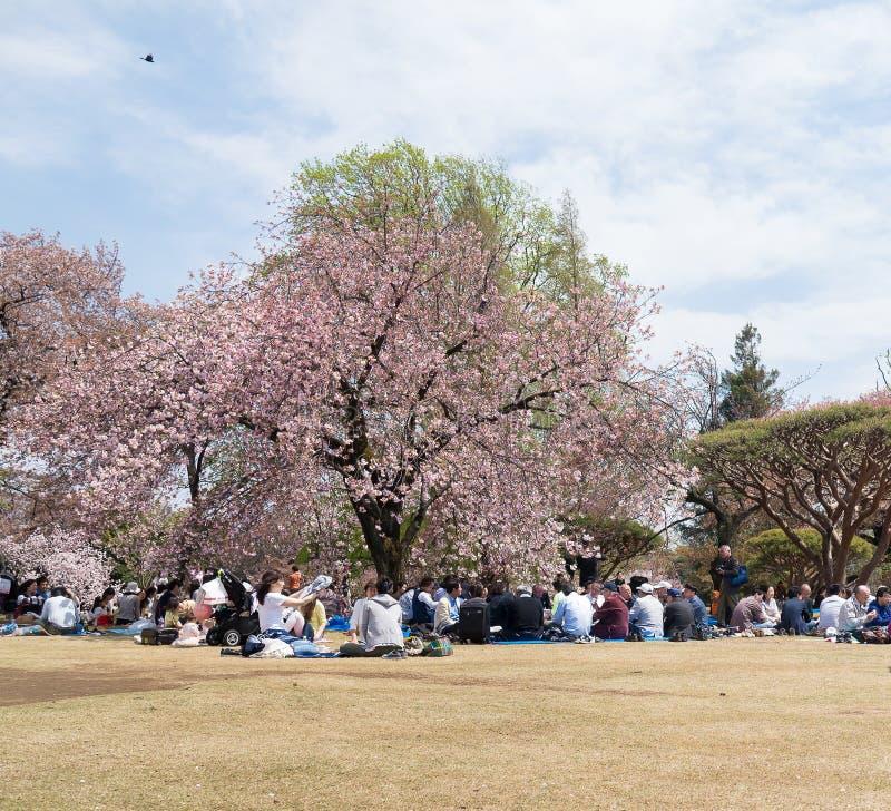 Landscape of Shinjuku Gyoen National Garden. Japan. Tokyo,Japan- April 15, 2016:Landscape of Shinjuku Gyoen National Garden. This is a large park and garden in royalty free stock photos