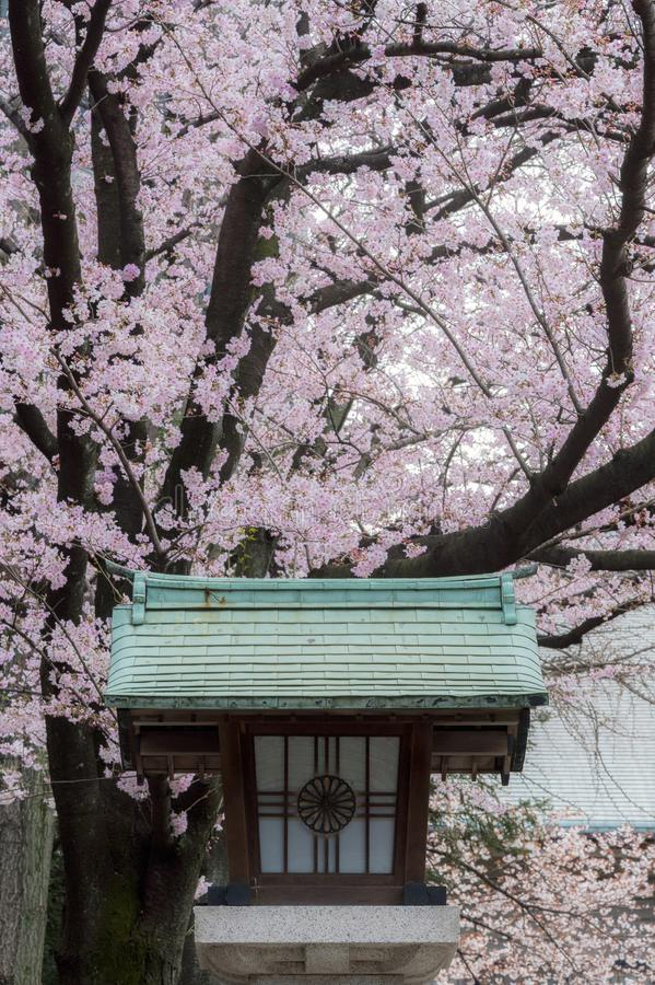 Entrance of Hie Shrine with the traditional lantern with imperial sign and the sakura cherry blossoms. stock images