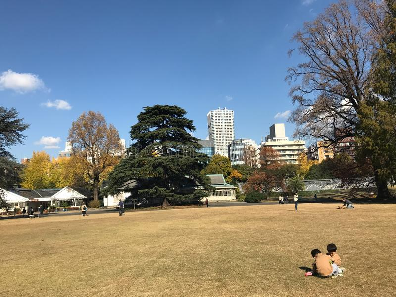 Two Japanese boy were playing together in autumn season at Shinjuku National Gyeon royalty free stock image