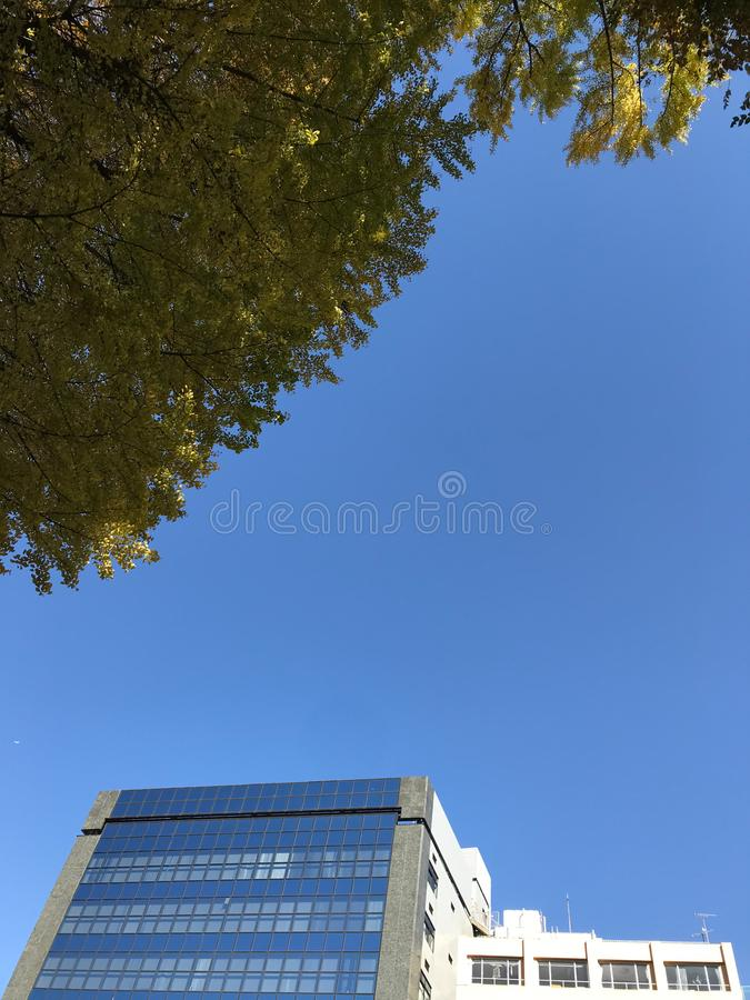 Modern building and yellow ginkgo tree when autumn season at Tokyo, Japan royalty free stock photos