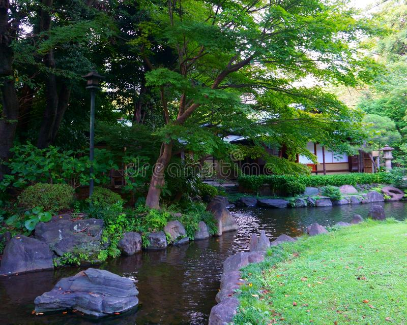 Pond in the Japanese garden. City park in Tokyo royalty free stock photo