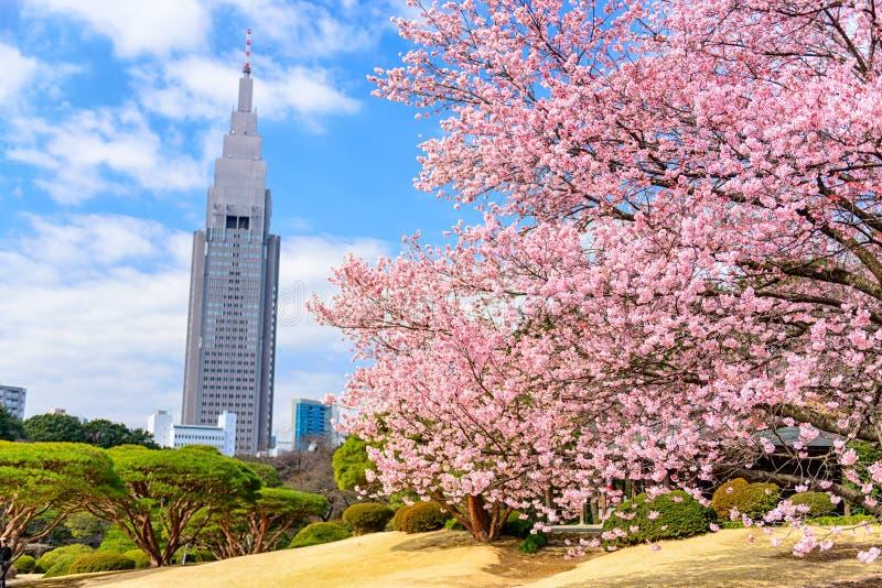 Tokyo Japan vår arkivbild