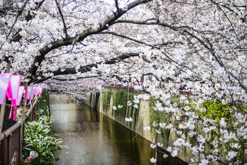 Tokyo Japan vårkanal royaltyfria bilder