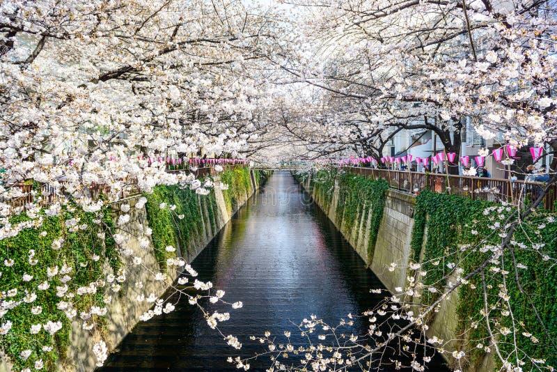 Tokyo Japan vårkanal fotografering för bildbyråer