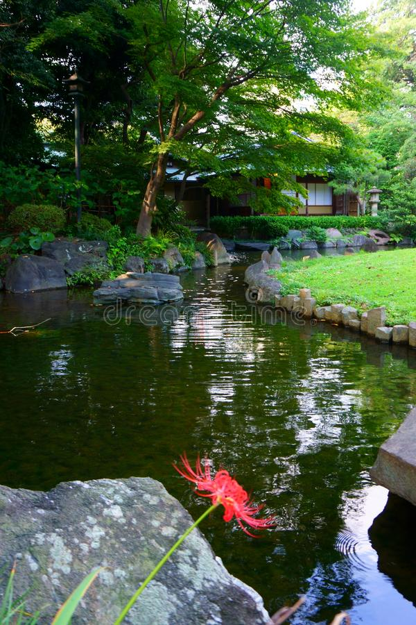 Pond in the Japanese garden. City park in Tokyo royalty free stock photos