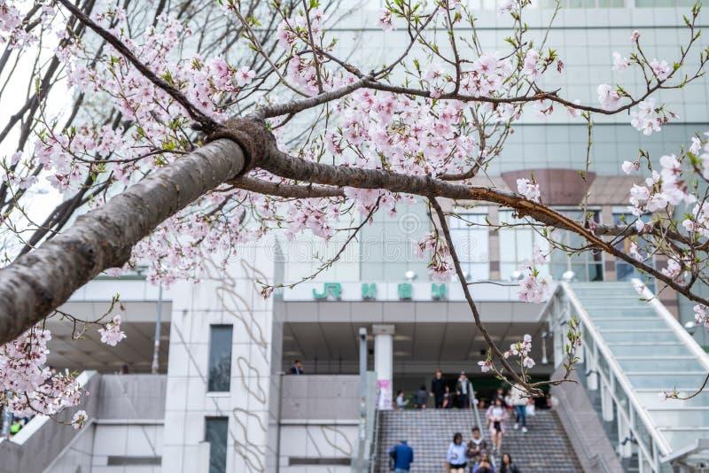 Tokyo, Japon - 22 mars 2019 : Vue de saison rose de fleurs de cerisier ou de branche de Sakura au printemps à la rue du JR statio photographie stock libre de droits