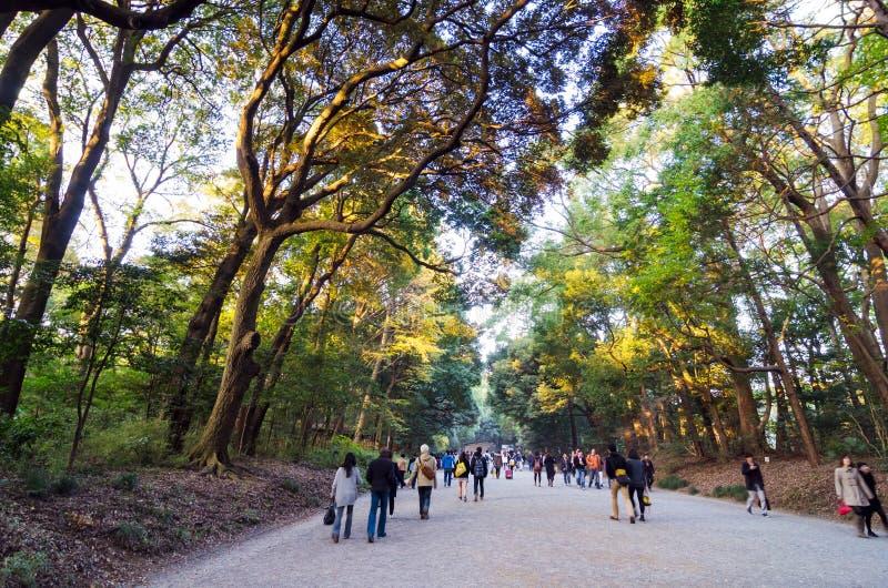 Tokyo, Japon - 23 novembre 2013 : Chemin forestier de visite de touristes se dirigeant vers le bas à Meiji Jingu Shrine photos stock