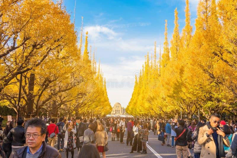 TOKYO, JAPONIA: 25 listopada 2017 r. : Ludzie odwiedzają Ginkgo Avenue w Tokio Jesienią kolorowy żółty Ginko liści gałęzie w Meij zdjęcie stock