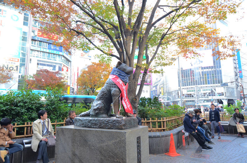 TOKYO - November 24: Hachikoas at Tokyoa is Shibuya railroad sta. Tion. on November 24, 2013 in Shibuya, Tokyo.Hachiko died on March 8, 1935, and was found on a stock images
