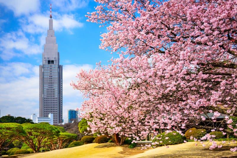 Tokyo parkerar på våren royaltyfri fotografi