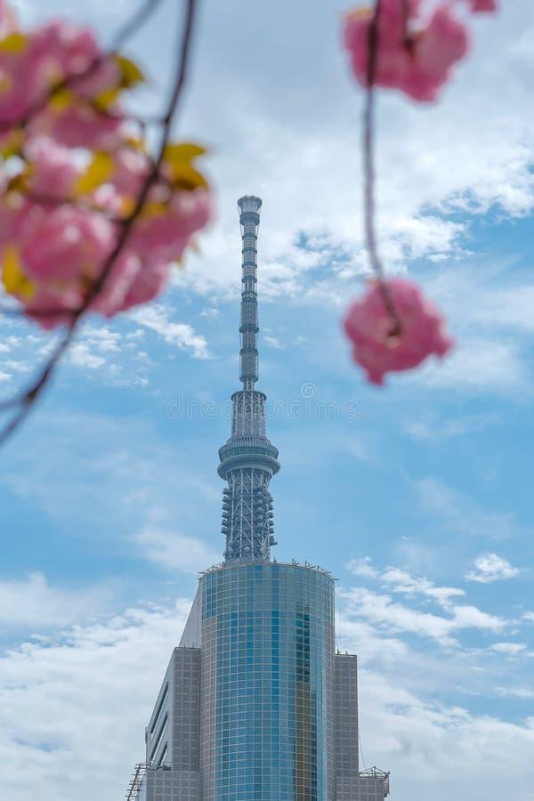 Tokyo Skytree met volledige bloeikers komt roze sakura bij Sumida-rivier, Tokyo, Japan 7 april 2018 tot bloei stock afbeeldingen