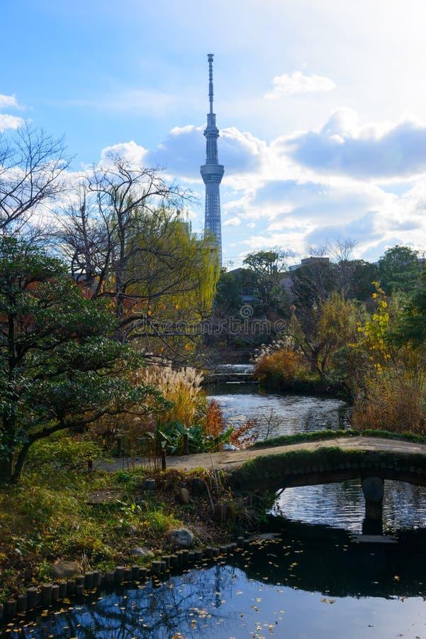 Tokyo Skytree and Mukojima-Hyakkaen Garden in autumn royalty free stock images