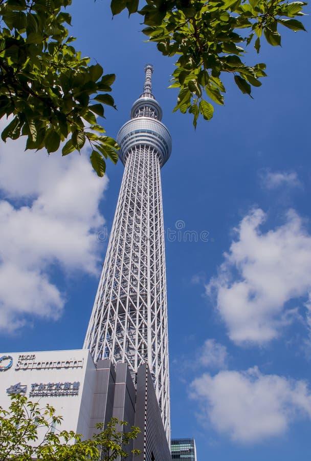 Tokyo Skytree sikt från den Sumida floden royaltyfri bild