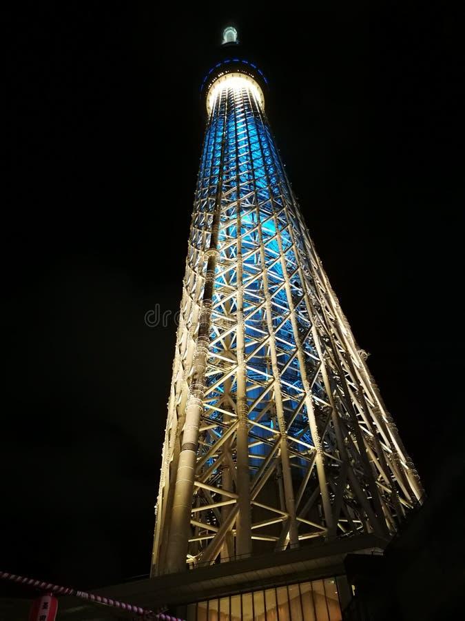 Tokyo träd fotografering för bildbyråer