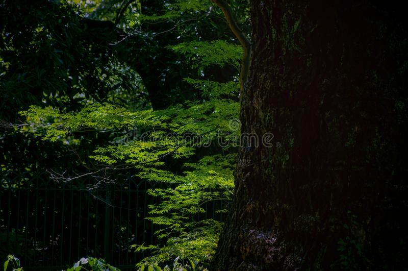 Tokyo, travel, summer, serenity, Japanese style, park stock photos