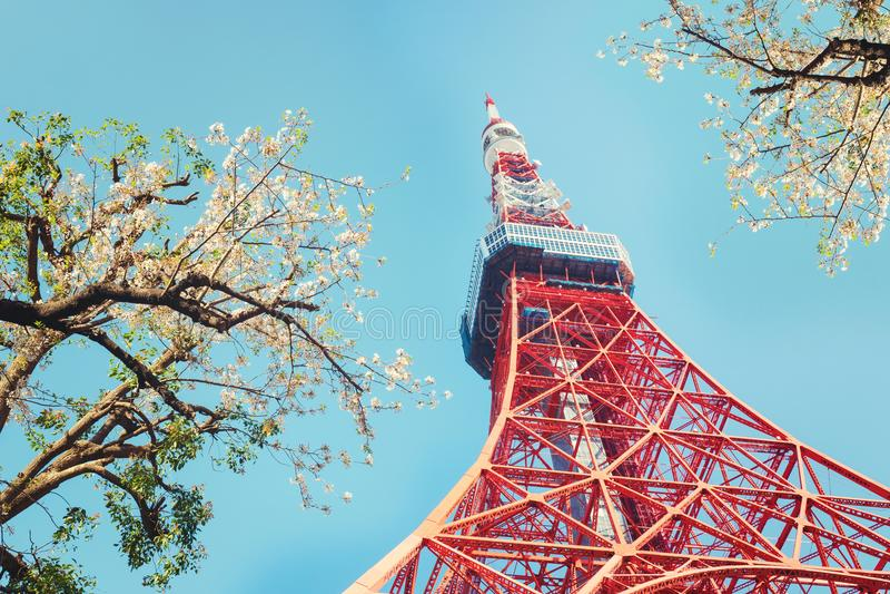 Tokyo-Turm mit Kirschblütenbäumen stockfotografie