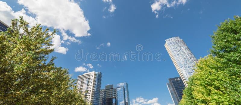 Toldo de árbol urbano del parque del panorama y edificio moderno imagen de archivo libre de regalías