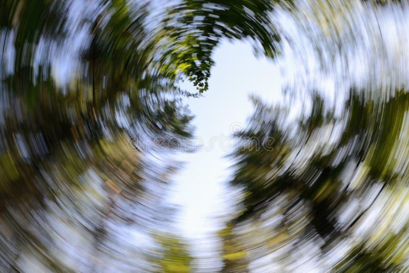 Toldo de árboles - fondo espiral abstracto del efecto foto de archivo