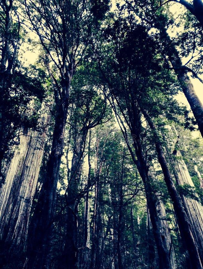 Toldo de bosque y troncos de árbol imagen de archivo