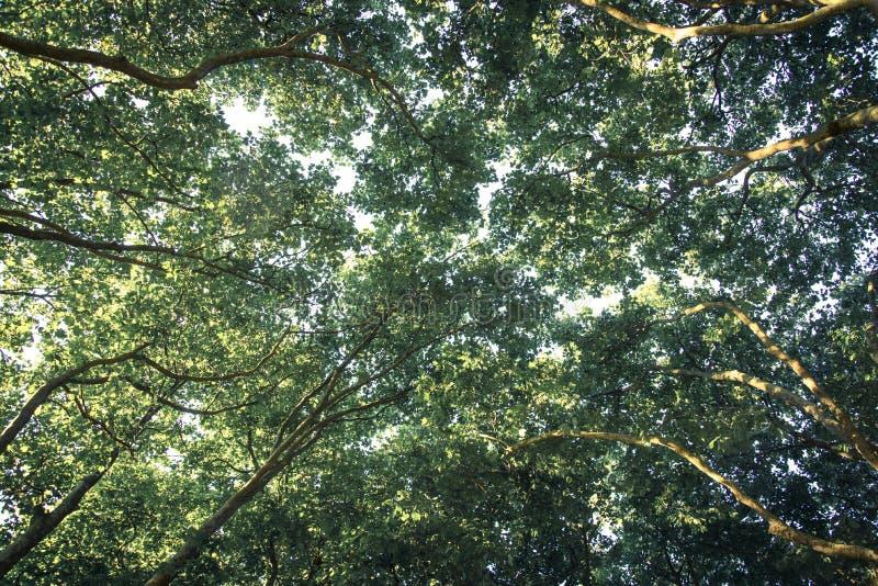Toldo de las ramas de árboles planos en el verano imagen de archivo libre de regalías
