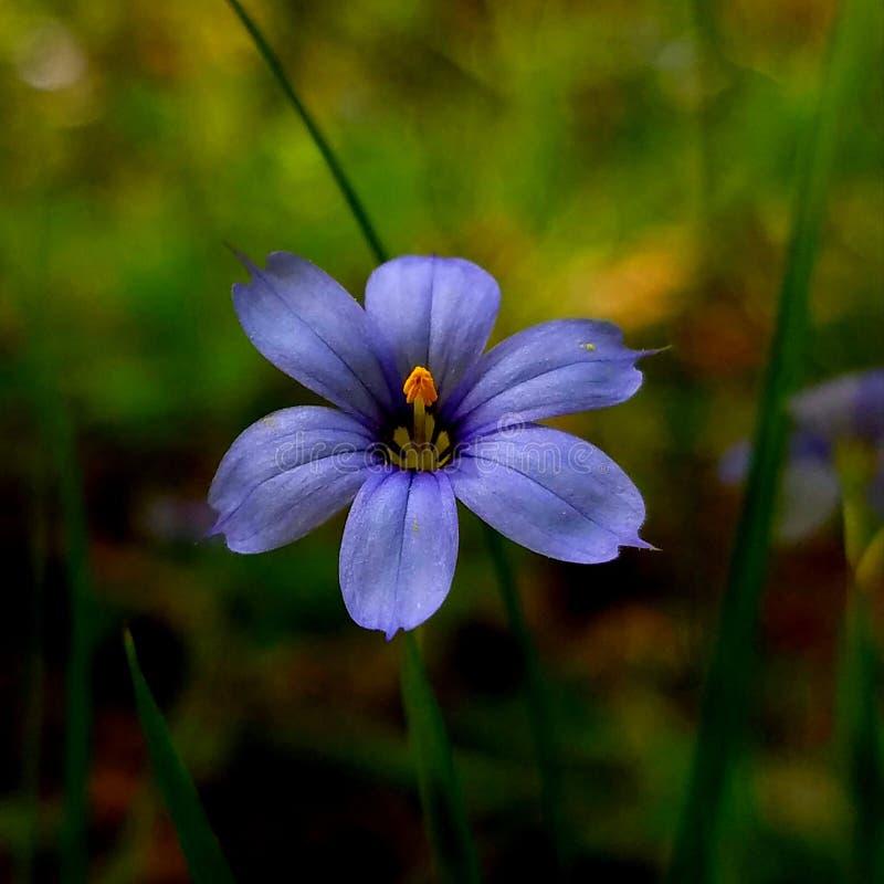 Tolerancia de la flor de la hierba fotografía de archivo libre de regalías