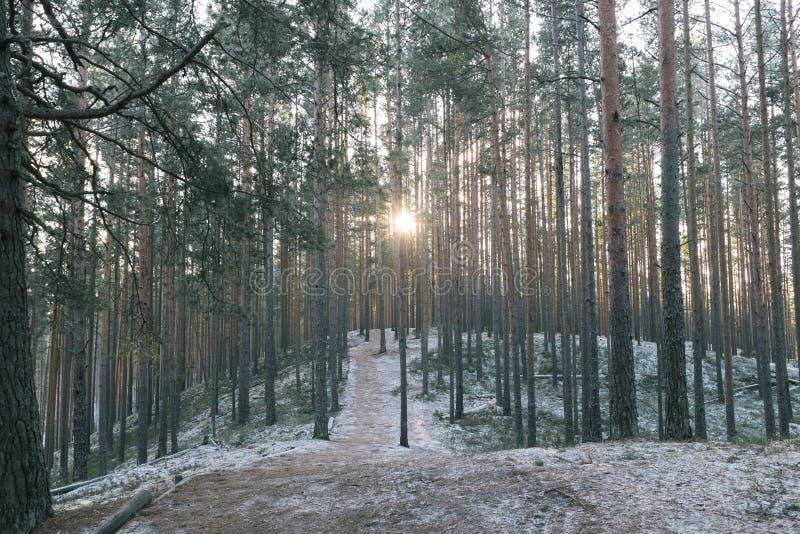 Tolkuse沼泽,爱沙尼亚 免版税库存照片