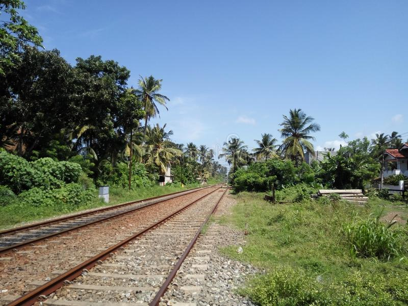 Tolle Eisenbahn durch den Dschungel lizenzfreie stockfotos