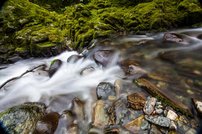 Tollymore Forest Park stockfotos