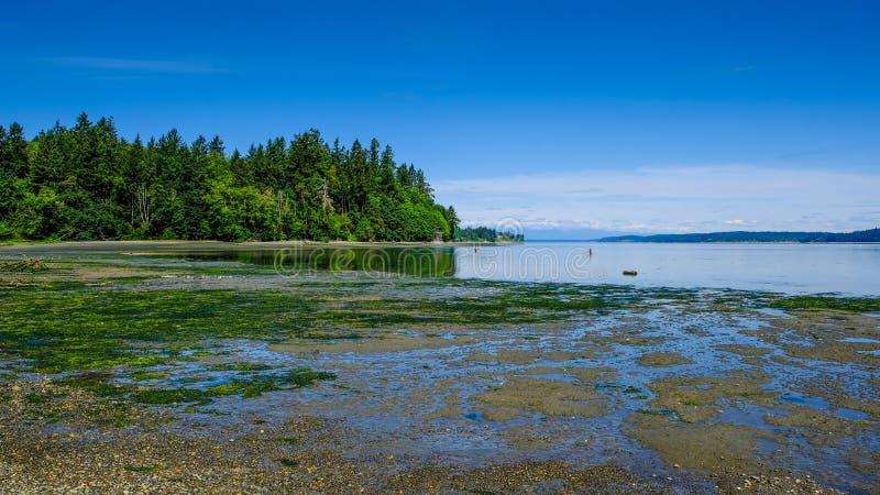 Tolmie-Nationalpark, Olympia, Washington, USA, bei Ebbe den Strand herausstellend lizenzfreies stockbild