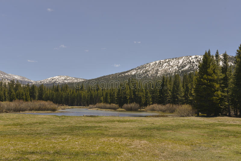 Tolumne Meadows, Yosemite National Park, Californi royalty free stock image