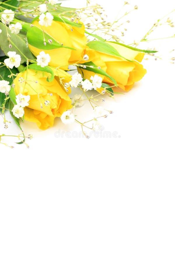 Rosa del amarillo e hierba de la neblina fotos de archivo libres de regalías