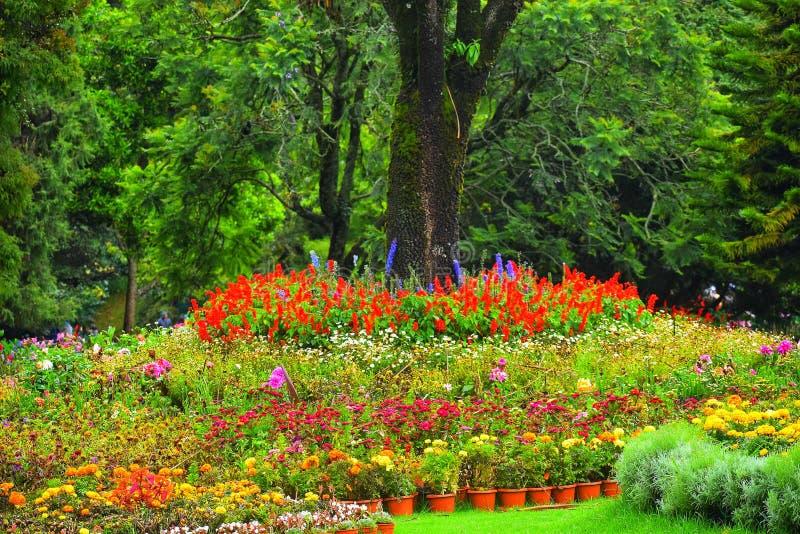 Tomó el tiro del jardín botánico en ooty imagen de archivo