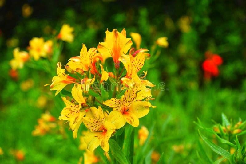 Tomó el tiro del jardín botánico en ooty foto de archivo