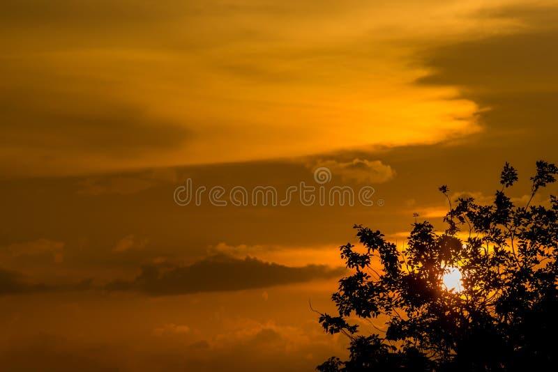 Tom amarelo ou alaranjado dourado e nuvens do céu do ouro no por do sol ou no tempo do nivelamento Atr?s da ?rvore fotos de stock