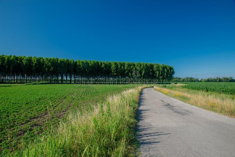 Tom asfaltväg i bygden mellan kultiverade fält, rader av popplar royaltyfri foto