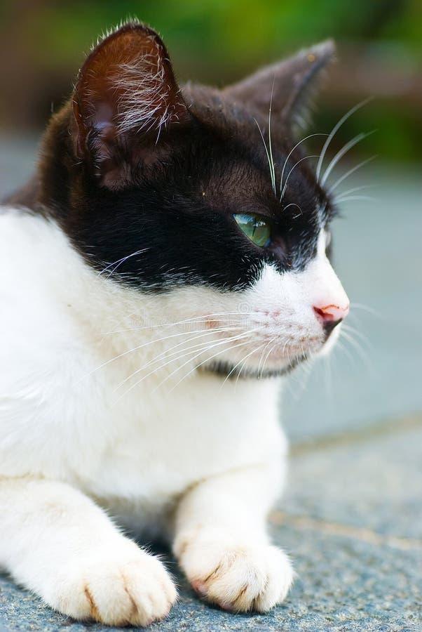 Tom Cat stock afbeelding
