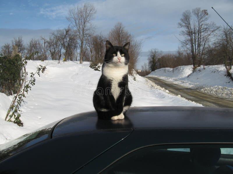 Tom-gato fotografía de archivo libre de regalías