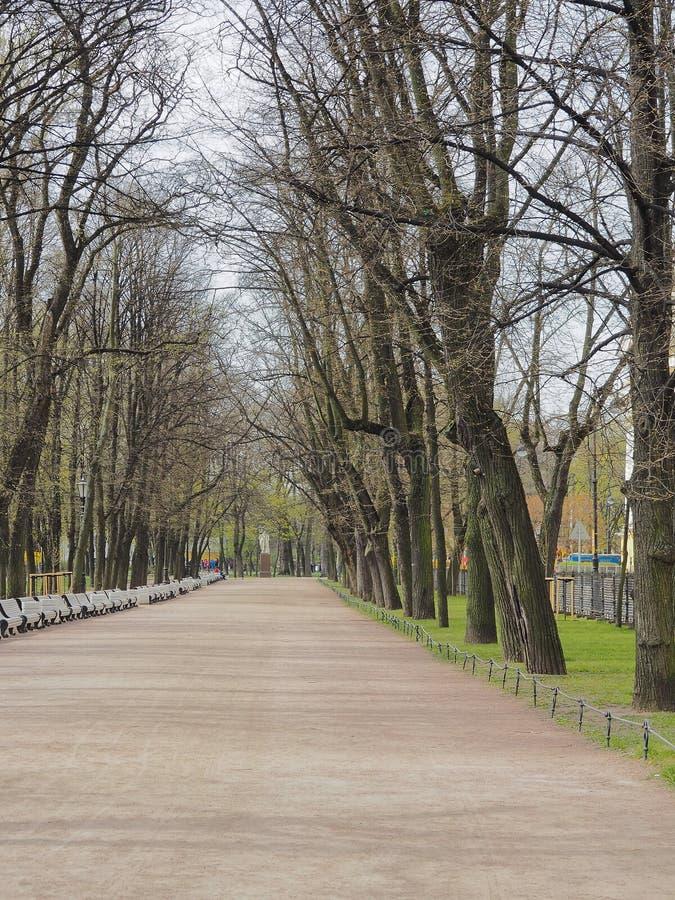 Tom gränd i den Alexander trädgården i vårdag, St Petersburg, Ryssland Promenad nära den Amiralitetet byggnaden royaltyfria bilder