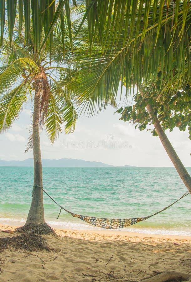 Tom hängmatta i skuggan av palmträd på den tropiska stranden Semestra och koppla av royaltyfria bilder