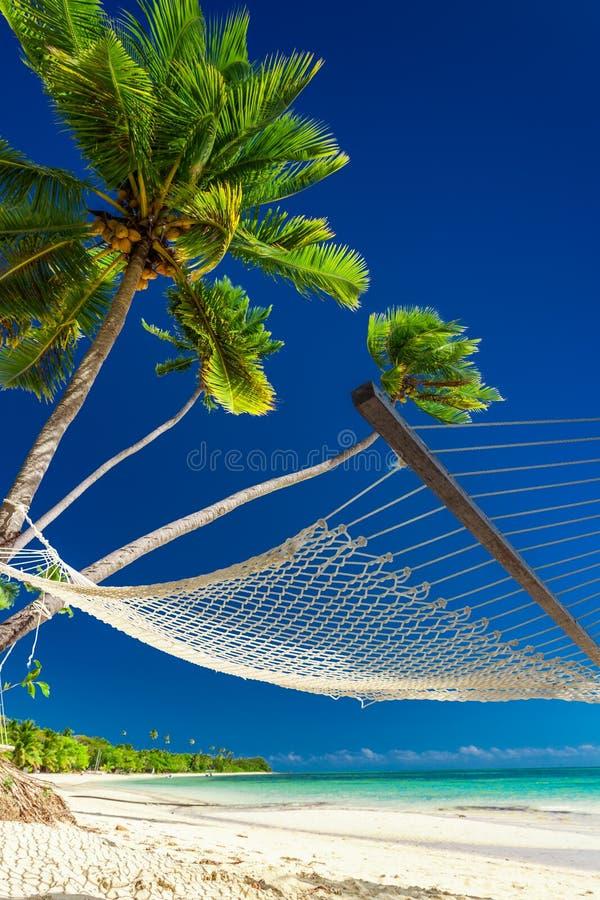 Tom hängmatta under palmträd på en strand av fijianska öar arkivbilder