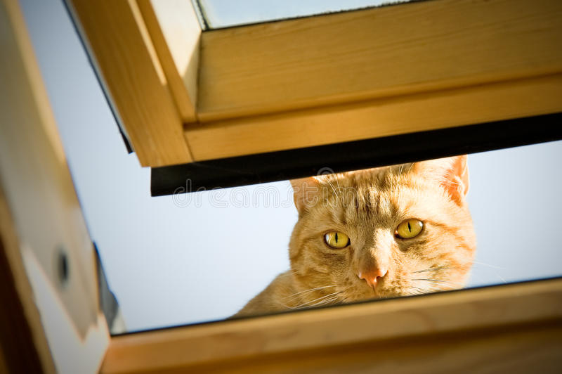 Tom Peeping imagens de stock