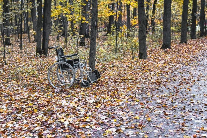 Tom rullstol i höstskogen, begrepp som hopp och mirakel, rörlighet och återhämtning för funktionshindrade royaltyfri fotografi