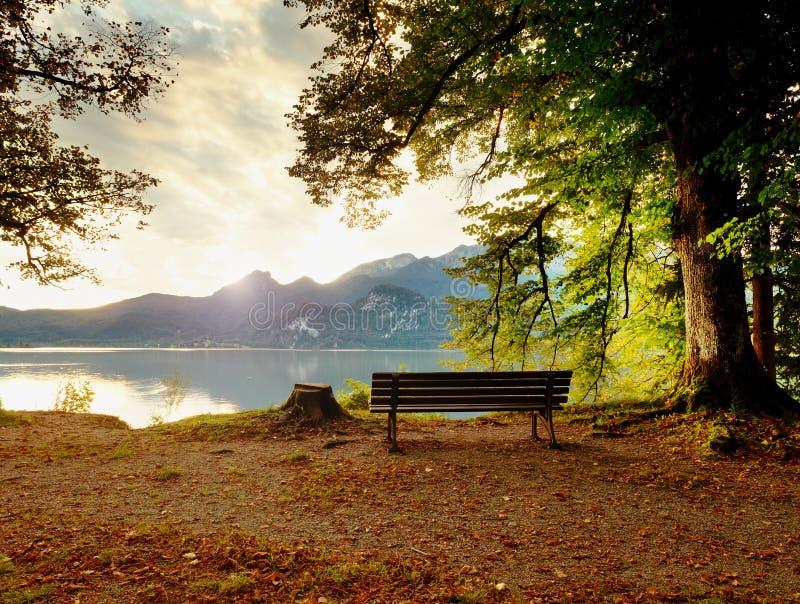 Tom träbänk på bergsjön Bank under bokträdträd, arkivbild