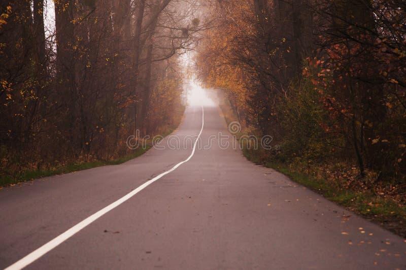 Tom väg i morgonen som passerar till och med en skog som täckas i mist eller dimma arkivfoto