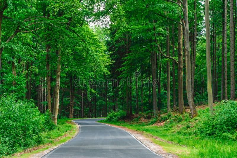 Tom väg mellan träd djupt i skogen fotografering för bildbyråer