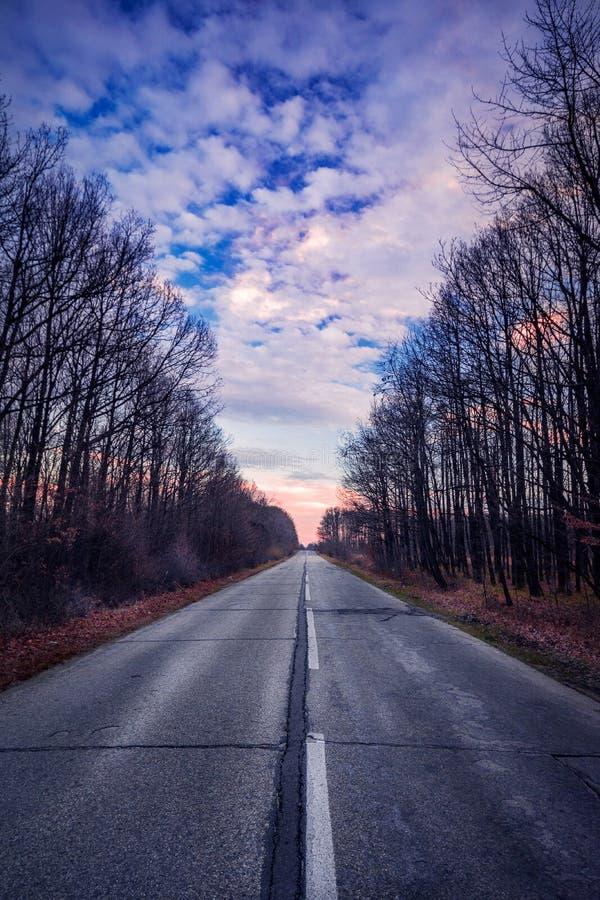 Tom vägbortgång till och med skog mot blå molnig himmel royaltyfri fotografi