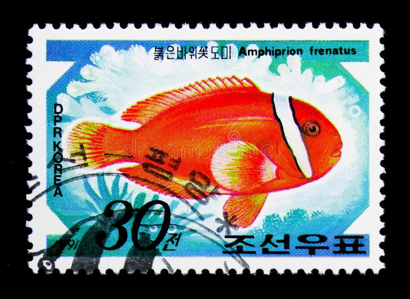 Tomaat Clownfish (Amphiprion-frenatus), Internationale Zegel Exhi stock fotografie
